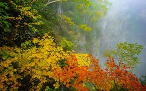 Picture autumn, fog, foliage, the colors of autumn, deriva