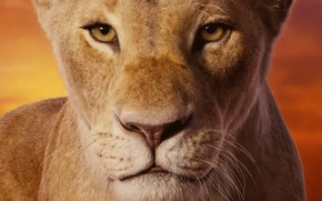 Picture look, face, lioness, The Lion King, The Lion King