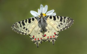 Picture macro, background, butterfly, wings