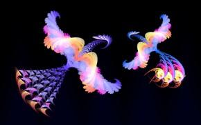 Picture birds, fantasy, fractals, minimalism, fantasy, black background, birds, fractals, by Pyrus-acerba