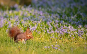 Picture flowers, spring, meadow, protein, ginger