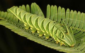 Picture caterpillar, sheet, background, dragon