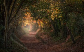 Picture autumn, trees, England, trail, the tunnel, the tunnel, England, West Sussex, West Sussex, Halnaker, Halnaker