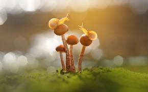 Picture macro, light, mushrooms, moss, snails, a couple, bokeh, toadstool, family