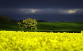 Picture Nature, Tree, Storm, Field, Rape