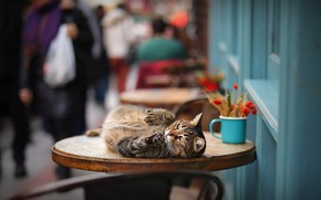 Picture cat, cat, on the table, bokeh, cat
