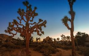 Picture sand, the sky, grass, sunset, stones, desert, plants, Joshua Tree, Joshua Tree National Park, Joshua …