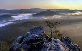 Picture fog, tree, mountain, morning