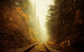 Picture autumn, fog, railroad