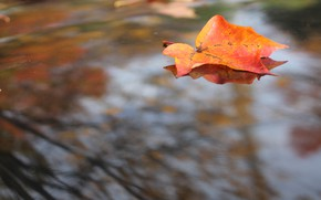Picture autumn, the sky, orange, branches, red, bright, nature, sheet, reflection, background, mood, foliage, leaf, blur, ...