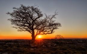 Picture sunset, stones, tree