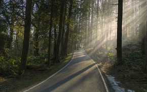 Picture road, forest, light