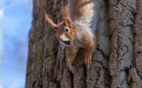 Picture nature, tree, animal, protein, trunk, animal, rodent