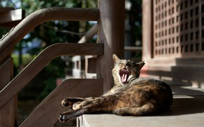Picture language, cat, cat, light, pose, grey, street, paws, mouth, ladder, railings, stage, lies, striped, yawns, …