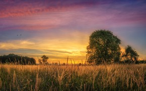 Picture sunset, tree, Field