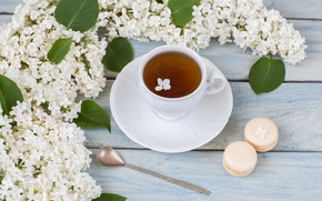 Picture tea, branch, morning, cookies, white, lilac