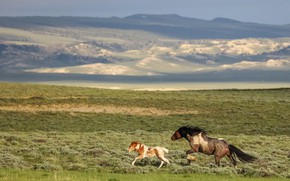 Picture field, mountains, horse, horses, horse, running, pair, foal