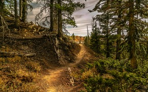 Picture forest, clouds, trees, path