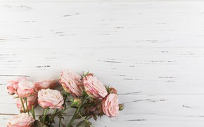 Picture flowers, roses, pink, wood, pink, flowers, beautiful, roses