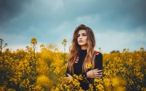 Picture field, girl, bokeh