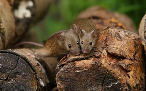 Picture Duo, mouse, logs