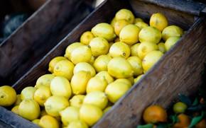 Picture harvest, fruit, box, a lot, lemons