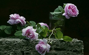 Picture glass, roses, the dark background