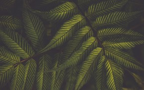 Picture leaves, green, plant
