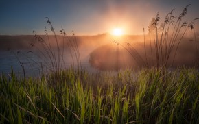 Picture summer, rays, landscape, nature, fog, river, dawn, morning, grass, Bank, Dubna, Andrei
