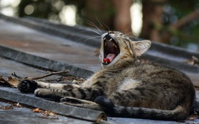 Picture roof, language, cat, cat, kitty, grey, mouth, lies, kitty, striped, yawns, bokeh, street, Zev