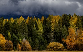 Picture autumn, forest, the sky, clouds, clouds, ate, shrubs, larch, forest