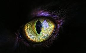 Wallpaper cat, eyes, the pupil