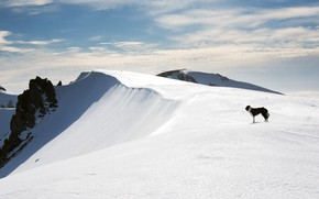 Picture cold, winter, the sky, clouds, snow, mountains, height, dog, slope, the snow, the border collie, …