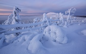 Picture winter, snow, trees, the fence, the snow, Finland, Finland, In Kuusamo, Kuusamo, Maxim Evdokimov
