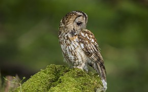 Picture owl, bird, moss, green background