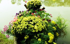 Picture lake, Park, flowerbed, chrysanthemum