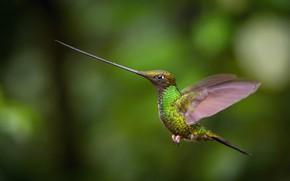 Picture flight, beak, Hummingbird, flight, hummingbird, beak, Petr Simon