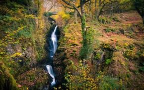 Picture autumn, forest, stream, waterfall