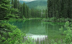 Picture greens, forest, trees, mountains, lake, Canada, Emerald Lake