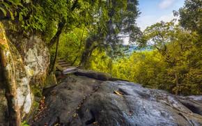 Picture Greens, Nature, Trees, The bridge