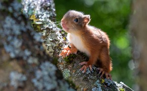 Picture look, light, background, tree, protein, face, bokeh, squirrel