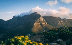 Picture clouds, landscape, flowers, mountains, nature, rocks, vegetation, flowering