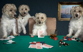 Picture dogs, card, the game