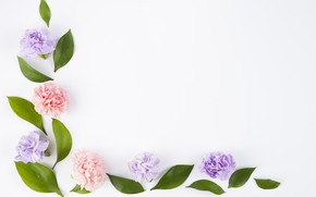 Picture leaves, flowers, background, pink, buds, fresh, pink, flowers, composition, violet, clove