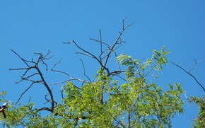 Picture summer, the sky, branches, Meduzanol ©
