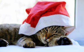 Picture cat, cat, look, pose, background, holiday, window, Christmas, bed, New year, lies, image, face, light …
