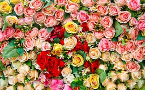 Picture flowers, roses, carpet