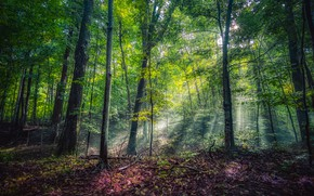 Picture greens, forest, the sun, trees, Park, USA, rays of light, Michigan, Leelanau