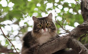 Picture cat, background, tree, bokeh