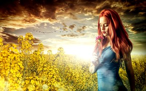 Picture girl, sunset, flowers, meadow